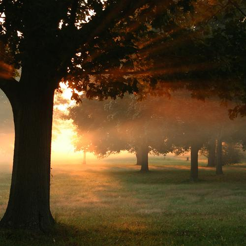 Morning sunshine in park
