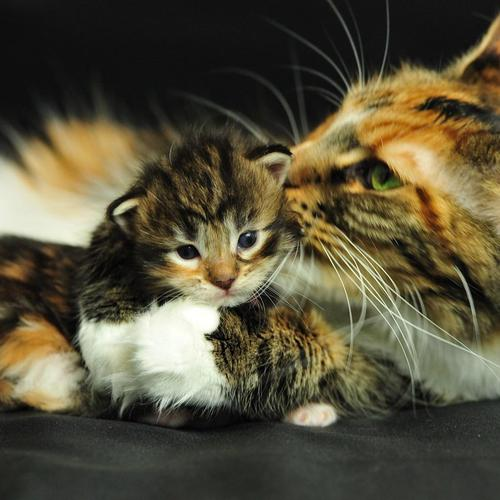 Mother cat and her baby