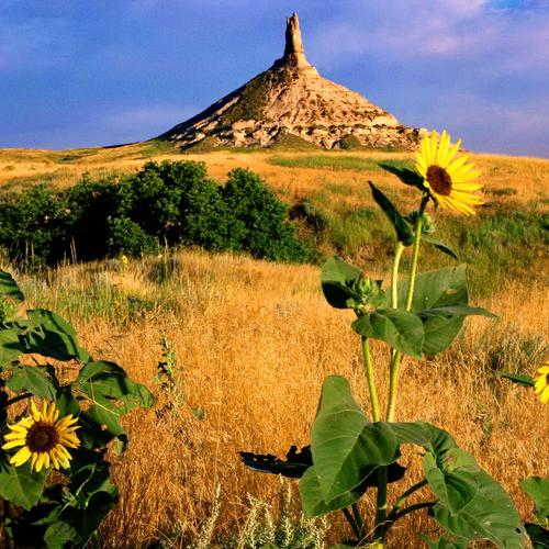 Berg, zonnebloem in Nebraska behang