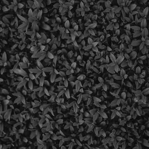 nature dark bw leaf grass garden flower pattern