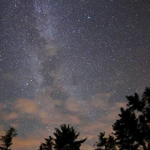 night sky stars milkyway wood nature