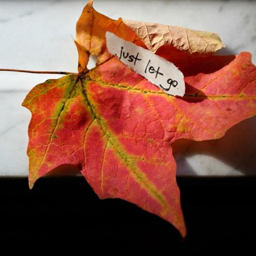 Note Leaf Maple Autumn