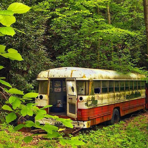 Old bus becoming a part of nature wallpaper