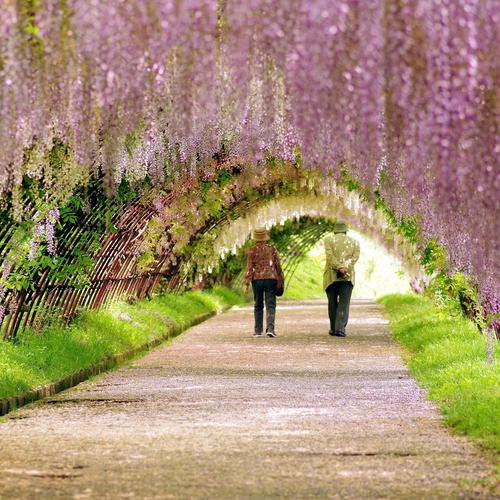 Old couple walking through nature