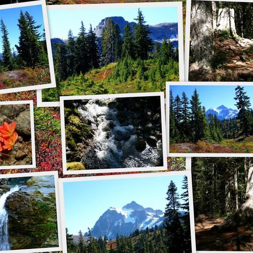 Pacific Northwest collage