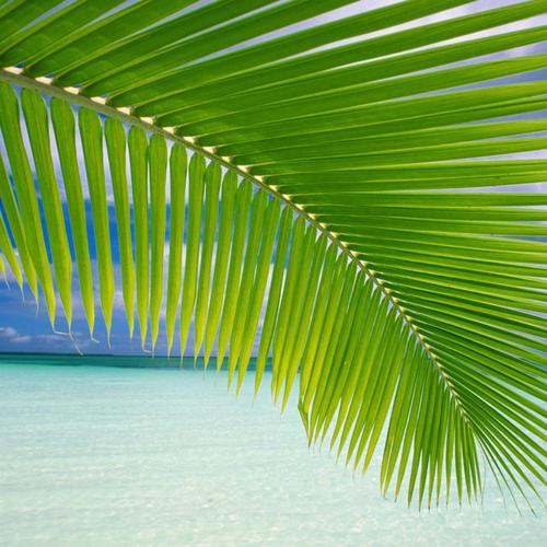 Palm leaf on beach wallpaper