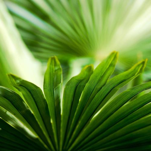 Palm leaves macro wallpaper