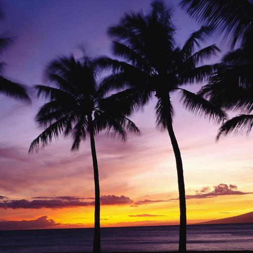 Palm Trees in Sunset wallpaper
