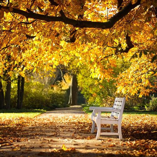 Park Autumn Bench behang