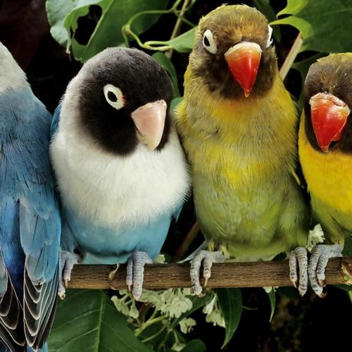 Parrot family wallpaper