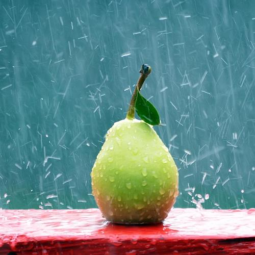 Pear under the rain wallpaper