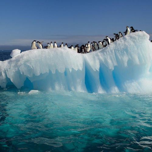 Penguins On Ice Floe wallpaper