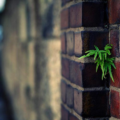Plant urban brick wall wallpaper