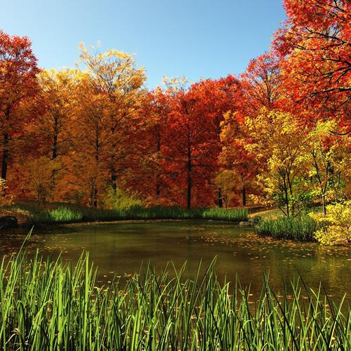 Pond in autumn and red leaves forest