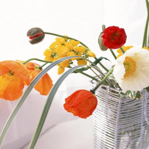 Poppies in vase wallpaper