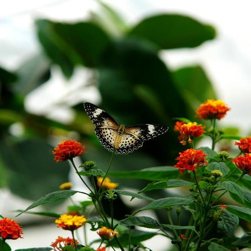 Pretty butterfly on flowers