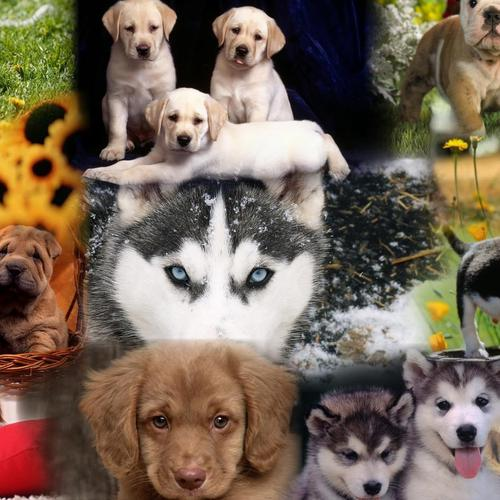 Puppy Dogs wallpaper
