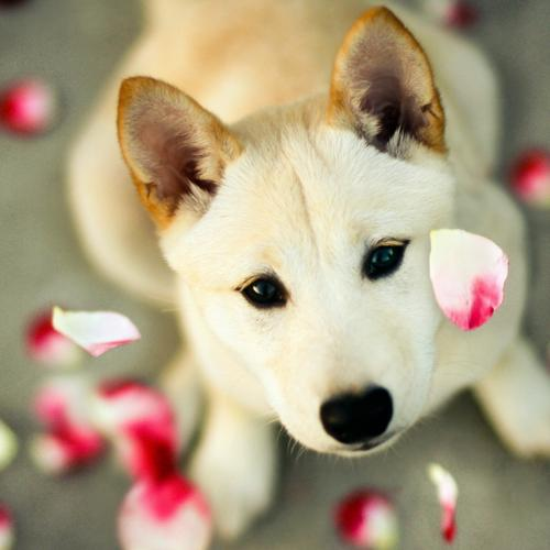 Puppy is watching falling petals