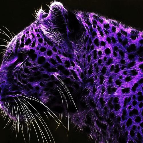 Purple Leopard wallpaper