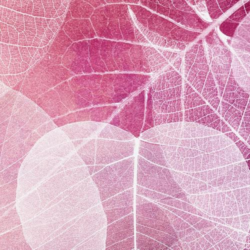 Purple Transparent Leaves wallpaper