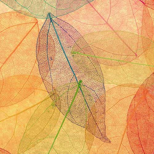 rainbow color leaf art fall nature pattern