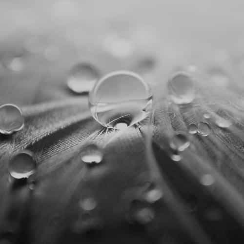 raindrops nature leaf art bw dark