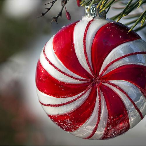 Red circle decoration on Christmas tree wallpaper