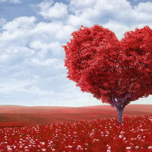 Red field and Red tree heart shaped wallpaper