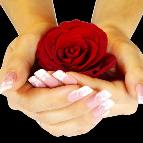 Red Rose in hands wallpaper