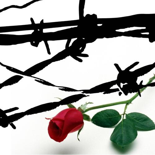 Rose Barbed Wire wallpaper