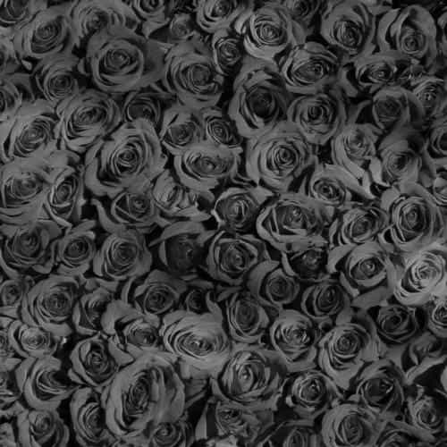 rose dark bw pattern