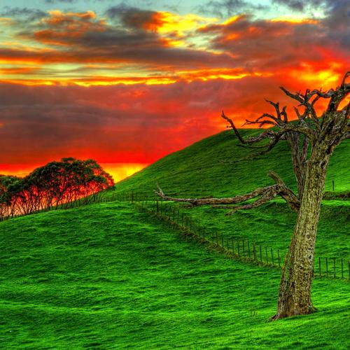 Rough tree on green field and fire sky