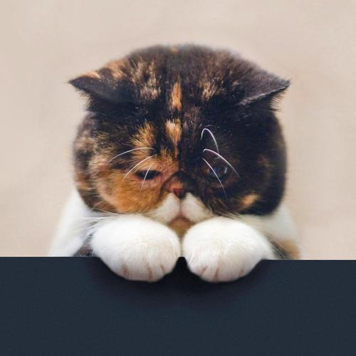Sad cute cat