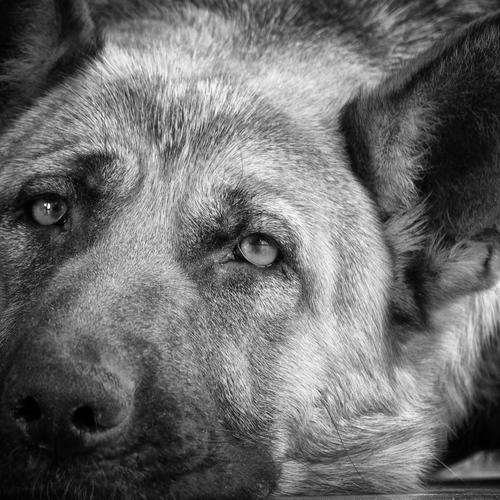 Sad dog black and white