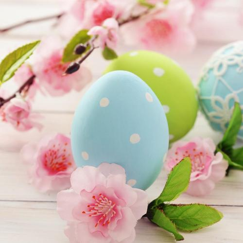 Download Sakura easter eggs High quality wallpaper