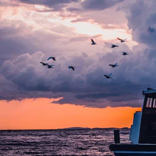 sea sunset birds sky ocean ship nature blue