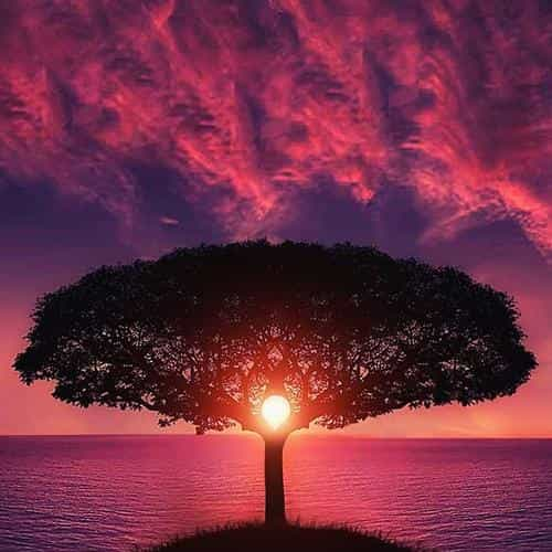 sea tree purple sky nature