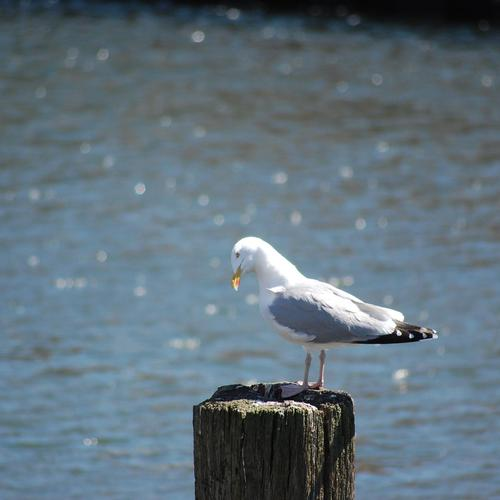 Seagull standing on the pole