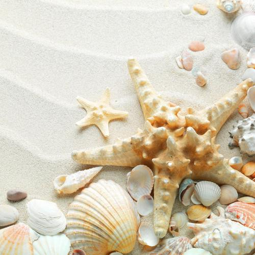 Seashells starfish wallpaper