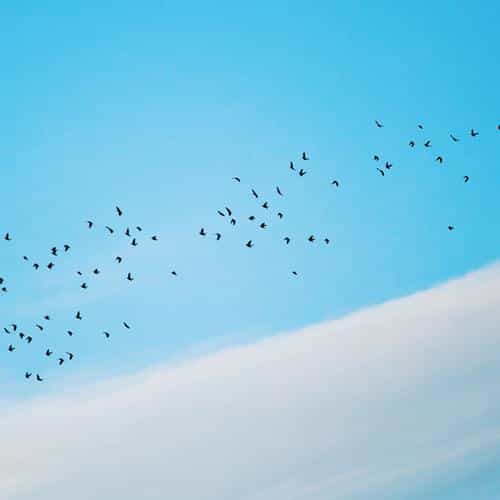 sky cloud birds fly nature
