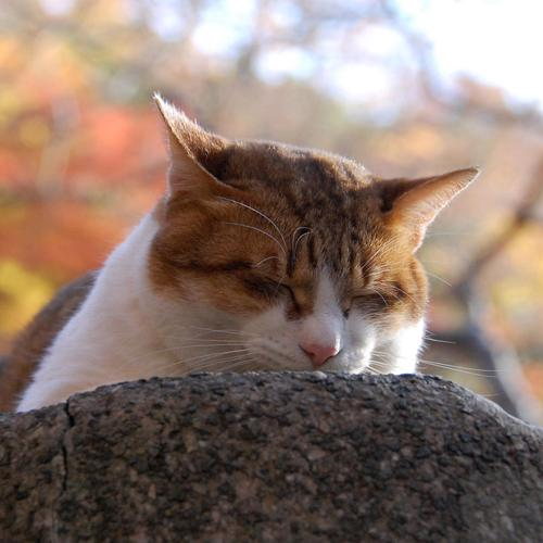 Sleeping cat in the rock