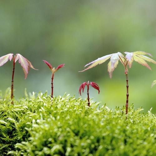 Small plants wallpaper