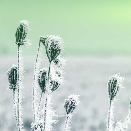 snow cold winter flower bokeh nature flare green