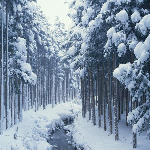 Snow Covered Forest Path wallpaper