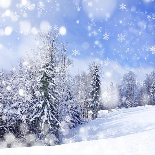 Snow in winter wallpaper