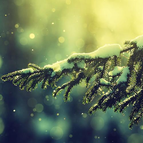 Snow on Christmas tree wallpaper