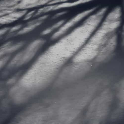 snow shadow winter tree nature