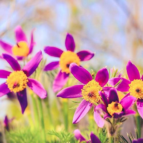 Spring Flowers Nature Bokeh wallpaper