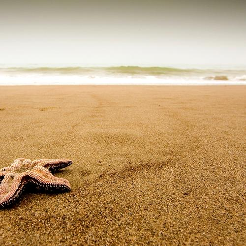 Starfish on the beach wallpaper