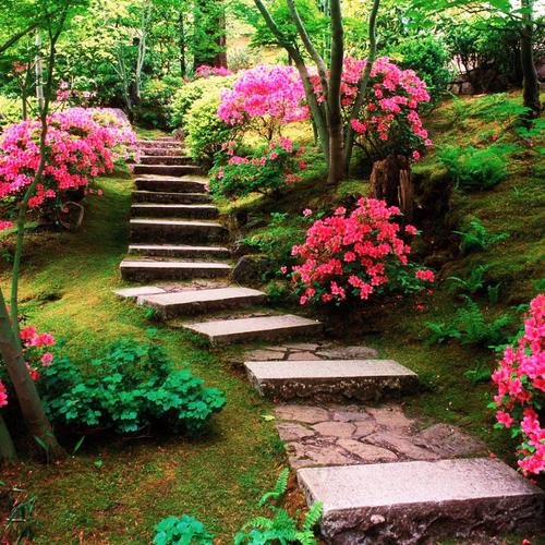 Steps in the blooms